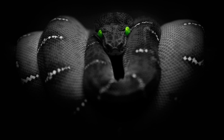 Black Mamba v3.0   Jinkchak